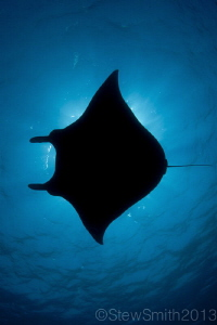 Manta from Komodo by Stew Smith 